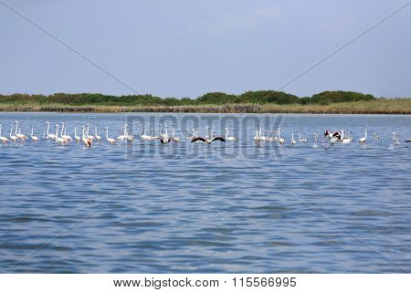 Flock Of Pink Flamingos
