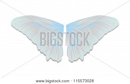 Vector Butterfly Wings