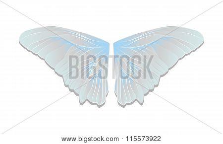 Vector Butterfly Wings