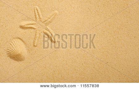 Shell Imprints