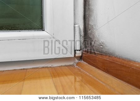 Condensation cause mold and moisture in the house
