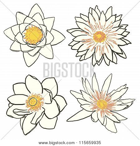 Set of four flowers, lotus and water lily