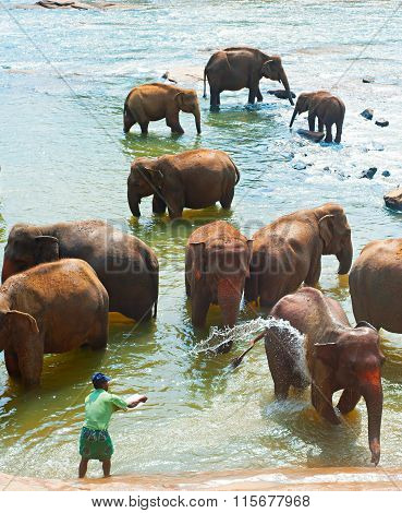 Elephants Bathing, Sri Lanka