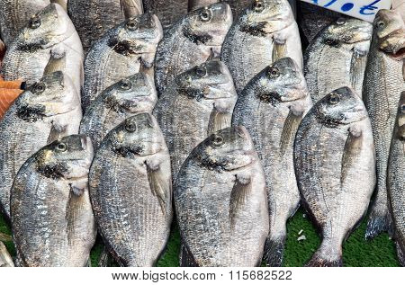 Fresh bream for sale at a market