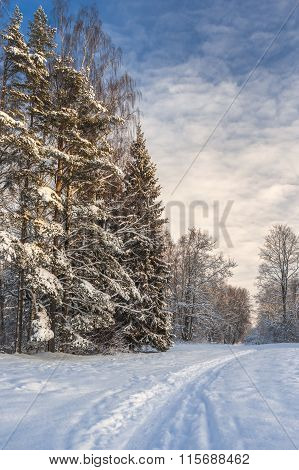 Pathway To Winter Forest