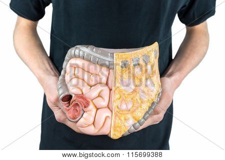 Man Holding Model Of Human Intestines Or Bowels On White