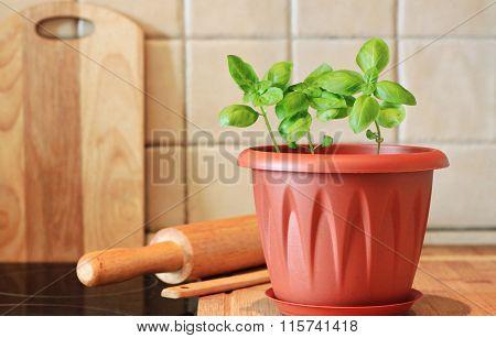 Basil kitchen garden