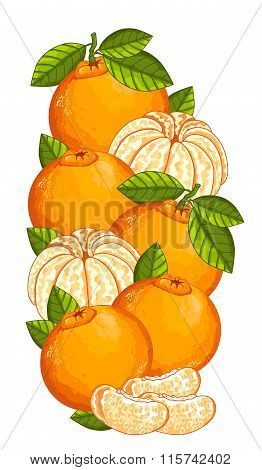 Mandarin isolated, Vector, composition.