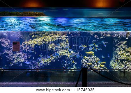 Big Aquarium Custo