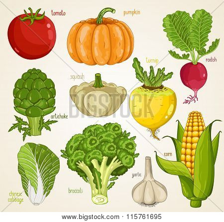 Vegetables isolated vector. Organic product, farm food. Fresh vegetable mix, Tomato, pumpkin, turnip, artichoke, squash, radish, garlic, broccoli, cabbage icon