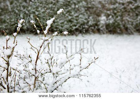 Branch of a tree in hoarfrost .