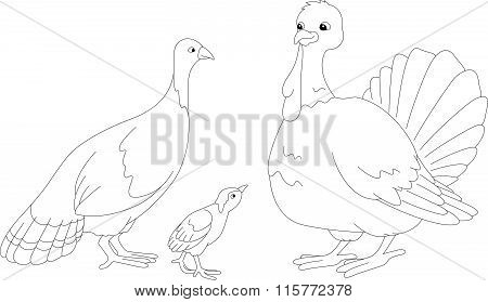 Set Of Turkey Mother, Father And Poult. Vector Illustration. Coloring Book
