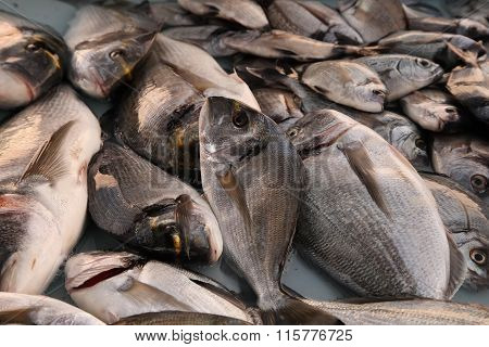 Fresh Fish At The Fish Market Of Old Port Of Marseille Vieux-
