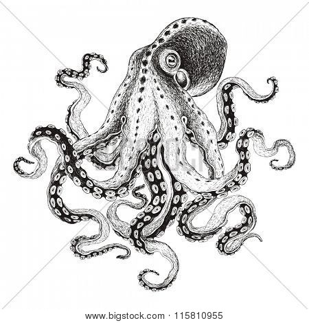 Hand-drawn illustration octopus, vector isolate on white background.