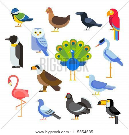Birds vector set illustration. Egle, parrot, pigeon and toucan. Penguins, flamingos, crows, peacocks