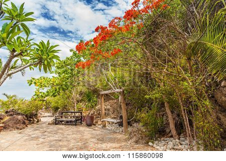 Tropical Island with Delonix Regia Trees near Nha Trang, Vietnam