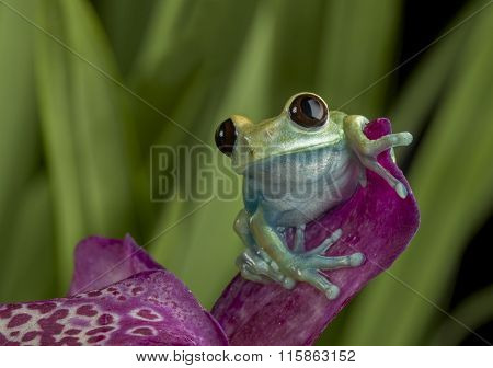 Tree Frog on Puple Flower