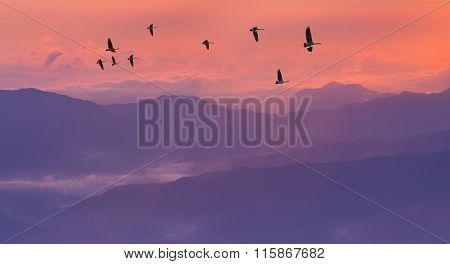 Sandhill Cranes Silhouetted In Sunrise