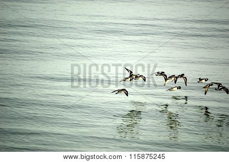 Turnstone Flight