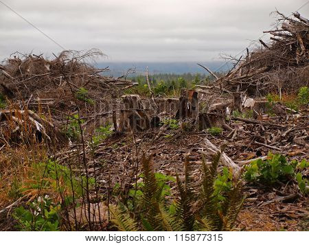 Piles Of Dead Tree Branches After Logging