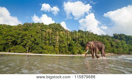 Walking Elephant On The Tropical Beach Background.
