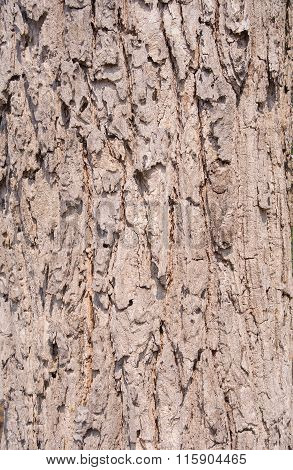 Tree Bark Patterns And Colors Natural Abstract Image.