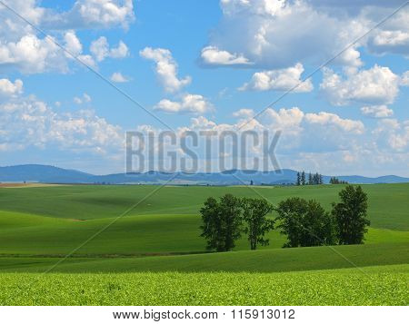 Beautiful Rural Scene With Green Fields And Cloudy Blue Sky