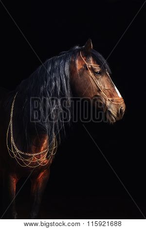 Bay stallion portrait isolated on black.