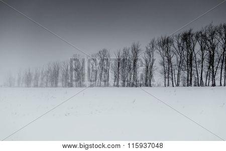 Winter Tree Lie In Monochrome B&w