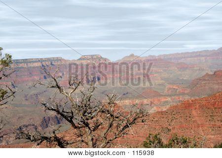 Dead Canyon Tree
