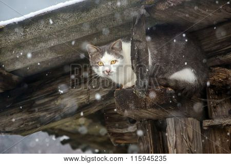 Stray cat hidding under the roof during strong snowfall