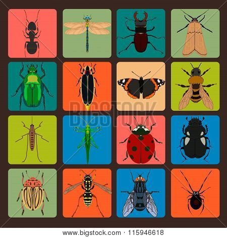 Insect Sign Set With Bug Grasshopper Spider Fly Ant Cockroach Butterfly