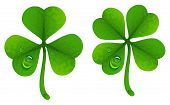 Clover leaves with drops of dew. Lucky Clover leaf. Four-leaf and trifoliate clover. Isolated on white vector illustration poster