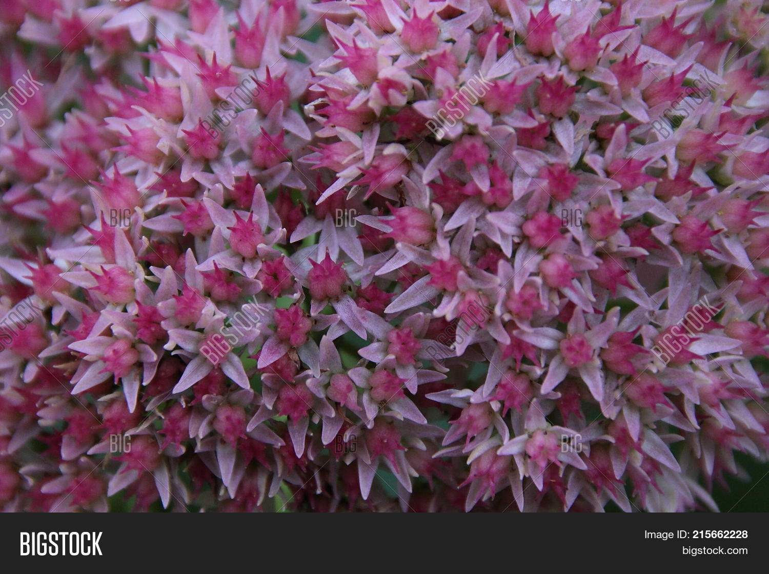 Pink Flowers Garden Image Photo Free Trial Bigstock