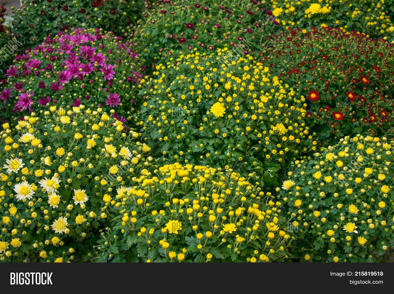 Varietal Cluster Image Photo Free Trial Bigstock