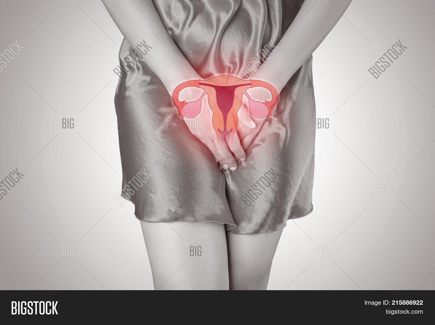 Photo Uterus On Woman Image Photo Free Trial Bigstock