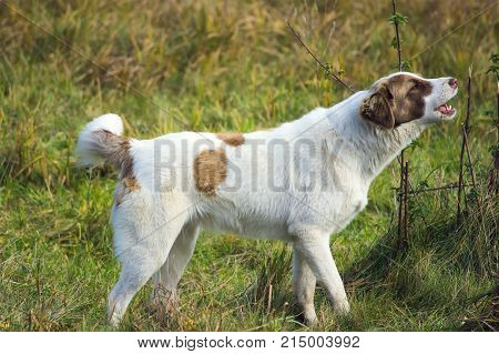 Cute Barking Dog Not Aggressive