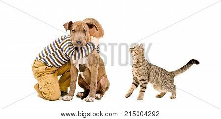 Affectionate boy, pit bull puppy and cat Scottish Straight, isolated on white background