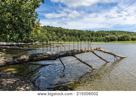 Uprooted tree trunks fallen in Jaunay Lake (Vendee, France)