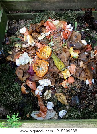 Fresh bio waste and compost with orange peels in the garden