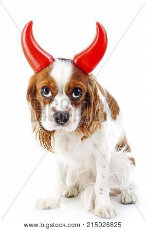 Guilty dog. Cute dog puppy with guilty face. Adorable cavalier king charles spaniel wearing devil horn costume. Cute dog photos on isolated white studio background. Cute.