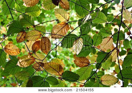 Composition Of Oak Leaves