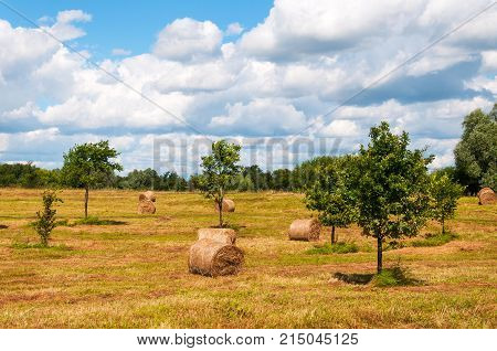 Straw bales, haystack on agricultural farmland in late summer