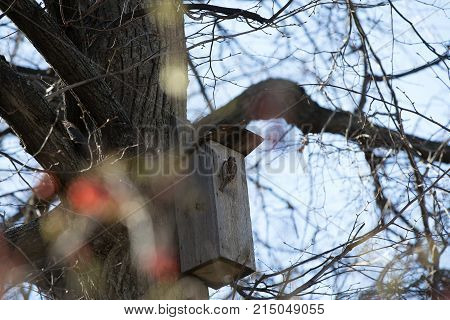 Wooden gray birdhouse and a sparrow on it on a blurred natural background. Nice handmade asylum for birds.