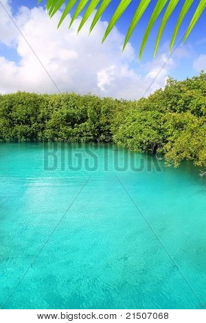 cenote mangrove with clear turquoise water in Mayan Riviera Mexico