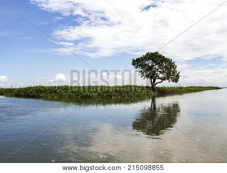 A tree stands alone at the entrance of Tempe Lake, Indonesia.