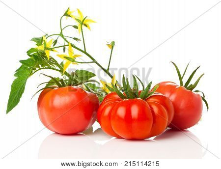 fresh tomatoes with bush on white background