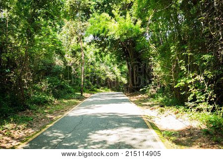 Sunshine In Morning Time With Asphalt Roads Cut Through Nature Has Green Tree On Both Sides. Image F