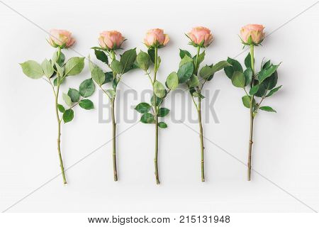 Pink Rose Flowers With Stems