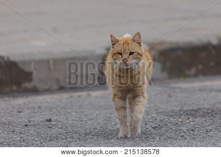 The Unhappy One-eyed Red Homeless Cat